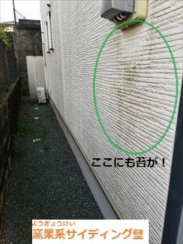 窯業系サイディング 苔