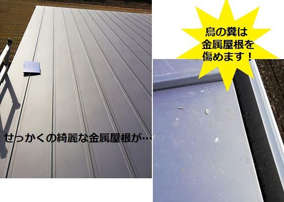 鳥の糞 金属屋根を劣化させる 酸性 糞害 鳥害
