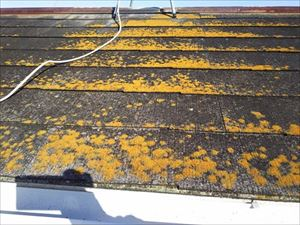 日陰 北側 屋根劣化 コケ