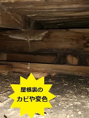 屋根裏 雨漏り カビ 変色