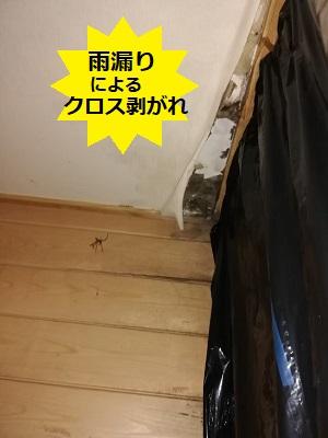 宇土市 雨漏り 谷樋 室内 クロス剥がれ