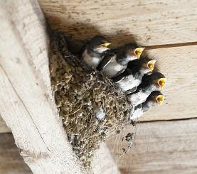 春は鳥害にご注意 糞害 住宅工事