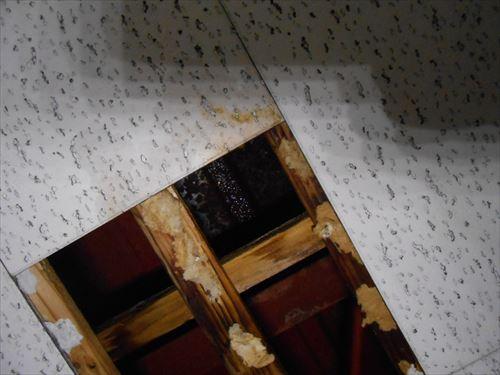 天井裏 雨漏れ状況